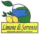 Limone_Sorrento