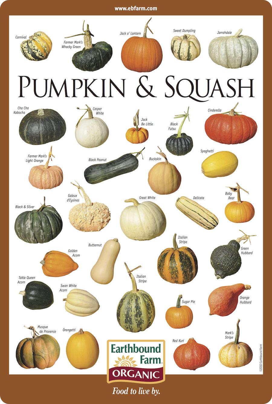 Pumpkin-ID-lr
