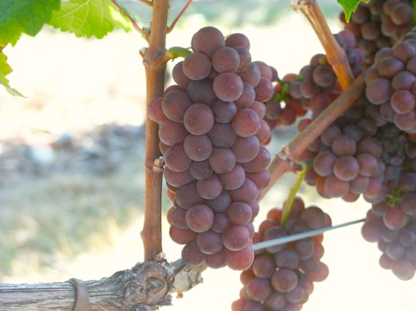 Vie-Di-Romans-Pinot-Grigio